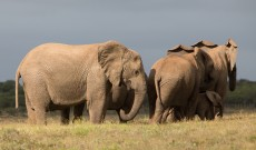 Addo – Hanging with the Hefalumps