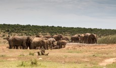 Addo – Canadian Grizzly Meets African Elephant